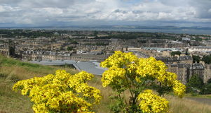 λουλούδια Σκωτία Στοκ Εικόνες