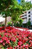 λουλούδια σπορείων Στοκ φωτογραφία με δικαίωμα ελεύθερης χρήσης