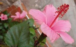 Λουλούδια στα διαφορετικά χρώματα στοκ εικόνες με δικαίωμα ελεύθερης χρήσης