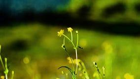Λουλούδια στα λιβάδια των βουνών φιλμ μικρού μήκους