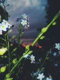 Λουλούδια στην αυγή της ημέρας στοκ εικόνες