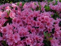 Λουλούδια στην ειδική θέση κήπων στοκ φωτογραφία