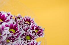 Λουλούδια στην κίτρινη ανασκόπηση Στοκ Φωτογραφία