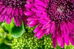 Λουλούδια στην πορφύρα χρώματος με τα πράσινα φύλλα Στοκ φωτογραφία με δικαίωμα ελεύθερης χρήσης