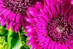 Λουλούδια στην πορφύρα χρώματος με τα πράσινα φύλλα Στοκ φωτογραφίες με δικαίωμα ελεύθερης χρήσης