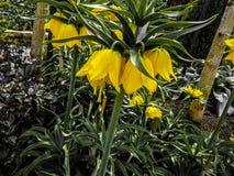 Λουλούδια στη ζούγκλα στοκ φωτογραφίες
