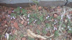 Λουλούδια στη μέση των πετρών στοκ φωτογραφία
