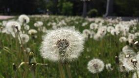 Λουλούδια στη Ρωσία, Chelyabinsk φιλμ μικρού μήκους