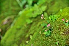 Λουλούδια στη φύση στο πράσινο υπόβαθρο στοκ φωτογραφία με δικαίωμα ελεύθερης χρήσης