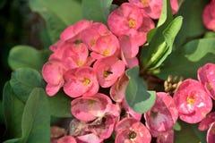 Λουλούδια στη φύση στο υπόβαθρο φύσης στοκ εικόνα με δικαίωμα ελεύθερης χρήσης