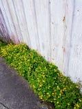 Λουλούδια στις άγρια περιοχές στοκ φωτογραφία με δικαίωμα ελεύθερης χρήσης