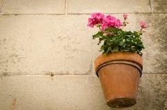 Λουλούδια στον αέρα στοκ φωτογραφίες