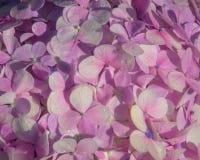 Λουλούδια στον κήπο ενός σπιτιού στοκ φωτογραφία με δικαίωμα ελεύθερης χρήσης