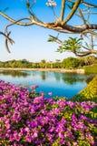 Λουλούδια στον κήπο και τη λίμνη στο μπλε ουρανό Στοκ Φωτογραφίες