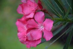 Λουλούδια στον κήπο μετά από τη βροχή στοκ εικόνες