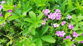 Λουλούδια στον κήπο απόθεμα βίντεο