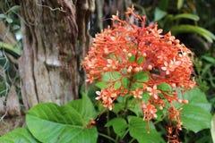 Λουλούδια στον κήπο Στοκ φωτογραφία με δικαίωμα ελεύθερης χρήσης
