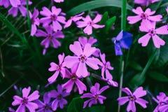 Λουλούδια στον κήπο στοκ φωτογραφία