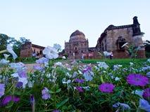 Λουλούδια στον κήπο Lodi, Νέο Δελχί, Ινδία στοκ φωτογραφία με δικαίωμα ελεύθερης χρήσης