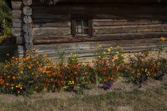 Λουλούδια στον τοίχο του σπιτιού Στοκ φωτογραφίες με δικαίωμα ελεύθερης χρήσης