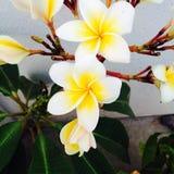 Λουλούδια στον τρόπο Στοκ Φωτογραφία