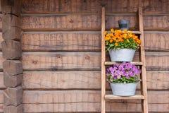 Λουλούδια στο άπαχο κρέας ραφιών σκαλών στον τοίχο Στοκ Εικόνα