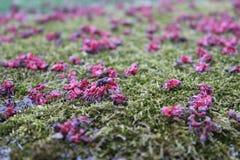 Λουλούδια στο έδαφος Στοκ εικόνα με δικαίωμα ελεύθερης χρήσης