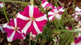 Λουλούδια στο πάρκο στοκ εικόνα με δικαίωμα ελεύθερης χρήσης