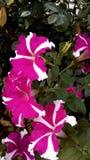 Λουλούδια στο πάρκο στοκ εικόνες με δικαίωμα ελεύθερης χρήσης