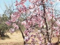 Λουλούδια στο πεδίο στοκ φωτογραφίες