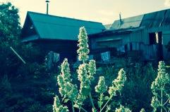 Λουλούδια στο χωριό Στοκ εικόνες με δικαίωμα ελεύθερης χρήσης