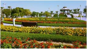 λουλούδια στο paek στοκ φωτογραφίες