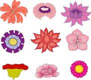 λουλούδια συλλογής απεικόνιση αποθεμάτων