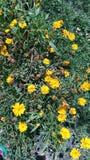 λουλούδια συμπαθητικά στοκ φωτογραφία με δικαίωμα ελεύθερης χρήσης