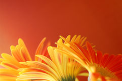 λουλούδια συνόρων Στοκ φωτογραφία με δικαίωμα ελεύθερης χρήσης