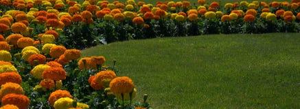 λουλούδια συνόρων Στοκ Εικόνες