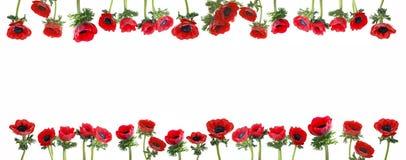 λουλούδια συνόρων Στοκ Φωτογραφίες