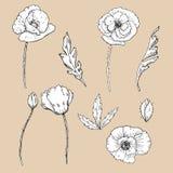 Λουλούδια σχεδίων συνδετήρας-τέχνη λουλουδιών παπαρουνών διανυσματική απεικόνιση