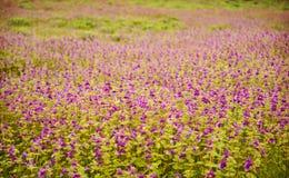 λουλούδια ταπήτων Στοκ εικόνα με δικαίωμα ελεύθερης χρήσης