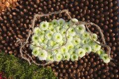 λουλούδια ταπήτων Στοκ φωτογραφία με δικαίωμα ελεύθερης χρήσης