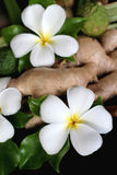 λουλούδια Ταϊλανδός Στοκ Φωτογραφίες