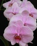 λουλούδια της αγάπης στοκ φωτογραφίες με δικαίωμα ελεύθερης χρήσης