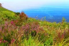 Λουλούδια της ερείκης στη λίμνη, Σκωτία Στοκ φωτογραφία με δικαίωμα ελεύθερης χρήσης