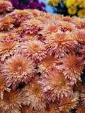 Λουλούδια της πτώσης στοκ φωτογραφία με δικαίωμα ελεύθερης χρήσης