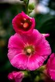 Λουλούδια της Ρωσίας στοκ φωτογραφίες με δικαίωμα ελεύθερης χρήσης