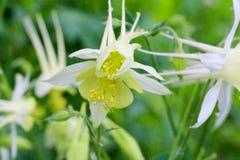 Λουλούδια της συλλογής στον κήπο την άνοιξη Στοκ φωτογραφία με δικαίωμα ελεύθερης χρήσης