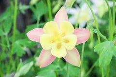 Λουλούδια της συλλογής στον κήπο την άνοιξη Στοκ Εικόνες