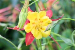 Λουλούδια της συλλογής στον κήπο την άνοιξη Στοκ εικόνες με δικαίωμα ελεύθερης χρήσης