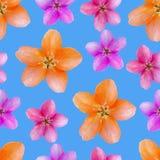 Λουλούδια της Apple Άνευ ραφής σύσταση σχεδίων των λουλουδιών Floral backg ελεύθερη απεικόνιση δικαιώματος