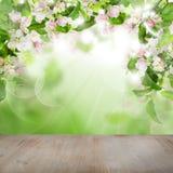 Λουλούδια της Apple άνοιξη, πράσινα φύλλα, αφηρημένο φως Bokeh Στοκ Εικόνα